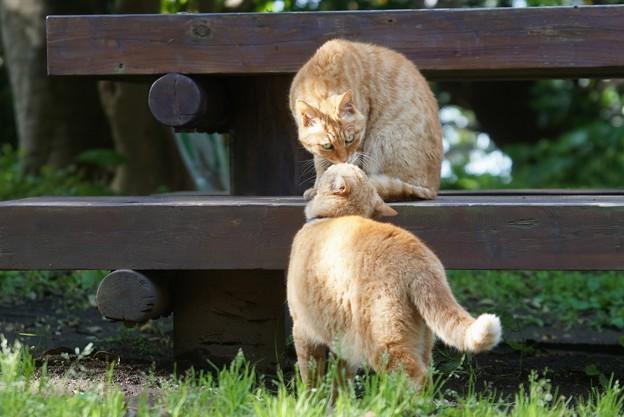 イチャイチャ猫