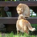 写真: イチャイチャ猫