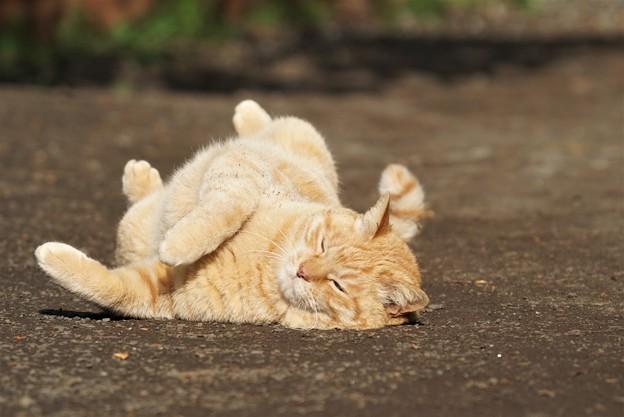 ごろごろ猫2