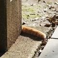 写真: 猫しっぽ