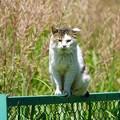 フェンス上の猫