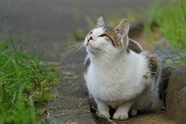 写真: 飛んでいるツバメが気になる猫
