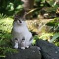 写真: 石の上にも猫