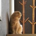 写真: たれ耳猫1