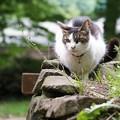 写真: 公園の猫