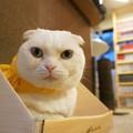 写真: 決め顔の猫