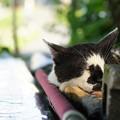 写真: 熟睡猫