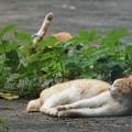 写真: 猫たち