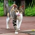 食べる気まんまん?の猫