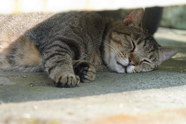 日陰で眠る猫