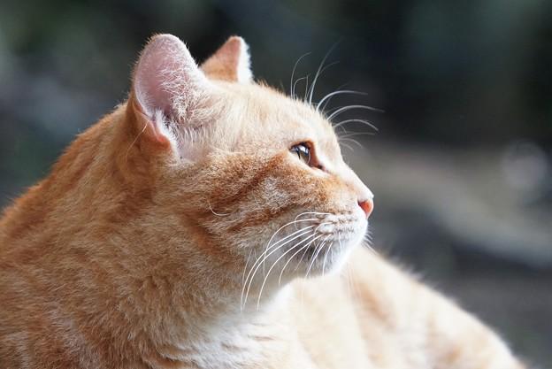 遠くを見る猫2