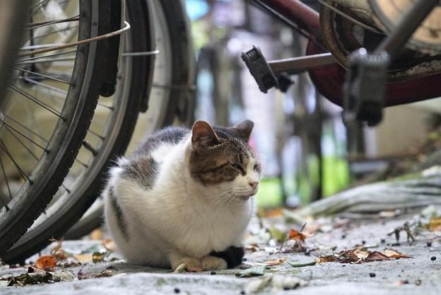 自転車置き場の猫