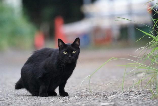 道端の黒猫
