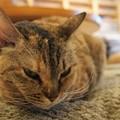 写真: つり目猫