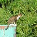 写真: たたずむ猫