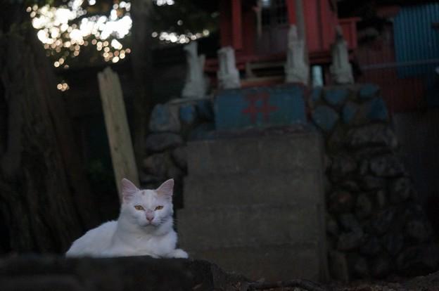 写真: 祠と猫