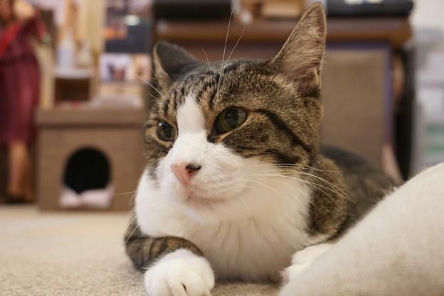 愛嬌ある猫