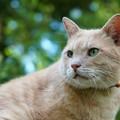 緑の中の緑の目の猫