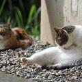 写真: くつろぐ猫たち