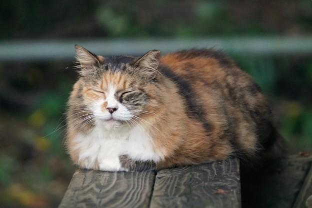 安定感ある猫
