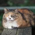 写真: 安定感ある猫