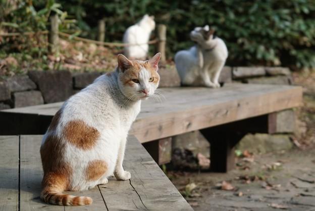 猫・猫・猫