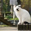 個性的な顔の猫