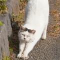 Photos: 伸び猫