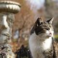 Photos: 庭園の猫