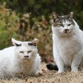 仲良し猫2