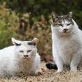 Photos: 仲良し猫2