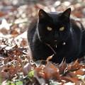 写真: 日向ぼっこ黒猫