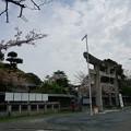 写真: 2017年4月9日 西公園 桜 福岡 さくら 写真 (109)