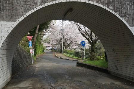 2017年4月9日 西公園 桜 福岡 さくら 写真 (123)