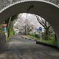 写真: 2017年4月9日 西公園 桜 福岡 さくら 写真 (123)
