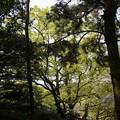 写真: 2017年4月9日 西公園 桜 福岡 さくら 写真 (124)