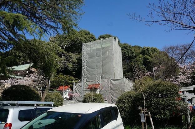 2018年3月28日撮影 西公園 桜 福岡 さくら満開 写真画像 (78)