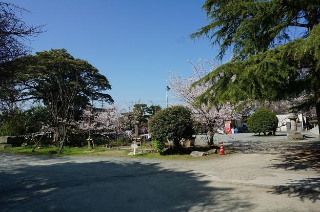 2018年3月28日撮影 西公園 桜 福岡 さくら満開 写真画像 (79)