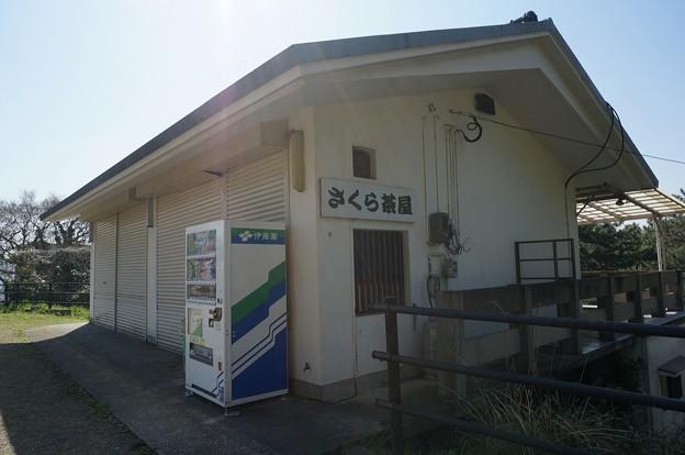 2018年3月28日撮影 西公園 桜 福岡 さくら満開 写真画像 (82)