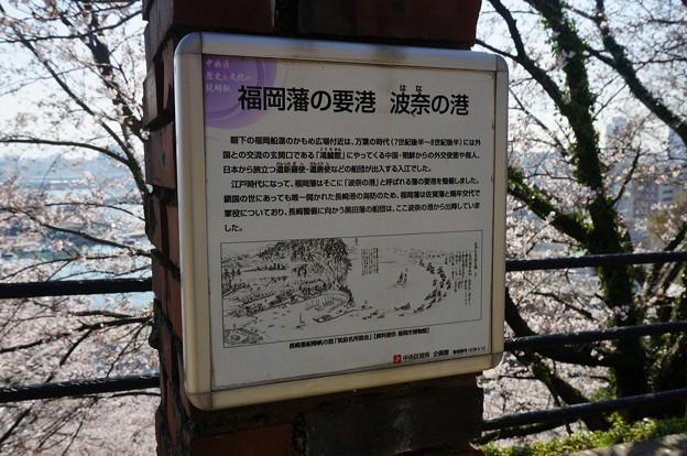 2018年3月28日撮影 西公園 桜 福岡 さくら満開 写真画像 (86)