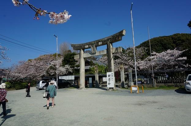 2018年3月28日撮影 西公園 桜 福岡 さくら満開 写真画像 (89)