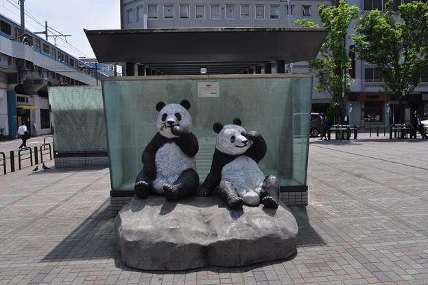 Photos: おかちまちパンダ広場