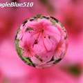 CIMG0227 640×480 50% SpangleBlue510