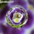写真: CIMG0247 640×480 50% SpangleBlue510