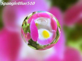 写真: CIMG0266 640×480 50% SpangleBlue510