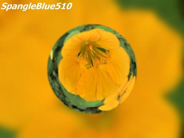 CIMG0237 1024×768 SpangleBlue510