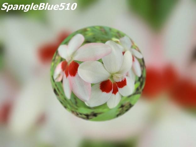 CIMG0235 1024×768 SpangleBlue510