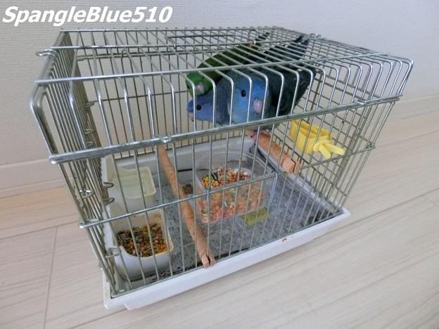 CIMG0744 MSTA 18 006~008 1024×768 SpangleBlue510