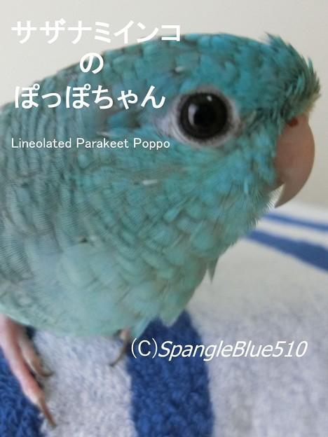 CIMG0863 ぽっぽ 1500×2000 表紙7