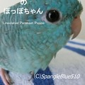 写真: CIMG0863 ぽっぽ 1500×2000 表紙7